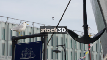 Seagull Perched On Sign At South Street Seaport, New York, USA