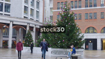 Christmas Trees In Paternoster Square In London, UK