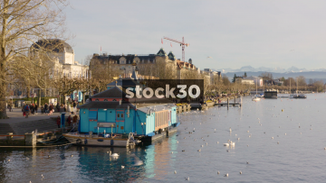 Limmat River In Zürich With Swans And Seagulls, Switzerland