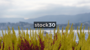 Lake Zürich, Focus Pull From Plants To Lake, Switzerland