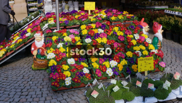 Dutch Flowers Stall In Sheffield Street Market, UK