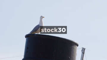 Close Up Shots Of Seagull Then Anchor At Aker Brygge In Oslo, Norway