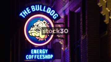 The Bulldog Energy Cofeeshop In Amsterdam, Netherlands