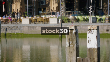 Bird Perched Atop A Wooden Post In Oude Haven Dock In Rotterdam, Netherlands