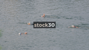 Swimmers Taking Part In Ironman Challenge In Tennessee River, Chattanooga, USA