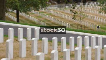Military Graves In Arlington National Cemetery, Washington DC, Slow Zoom Out, USA