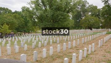 Military Grave Stones And Giant Oak Tree In Arlington National Cemetery, Washington DC, USA
