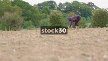 Farm Workers Harvesting Asparagus, UK