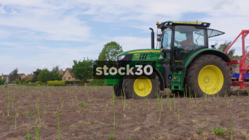 Tractor Passing By In Asparagus Field With Farm Workers Harvesting Crop Behind, UK