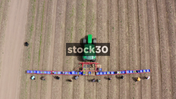 Overhead Rising Drone Shot Of Farm Workers And Tractor Harvesting Asparagus, UK