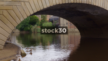 Geese Under A Bridge Over The River Ouse In York, UK