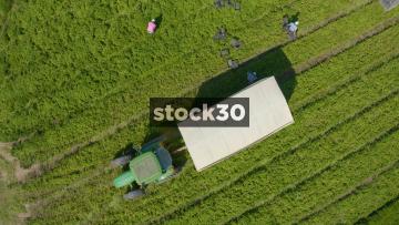 Ascending Overhead Drone Shot Of Workers Harvesting Crops In Farm Field, UK