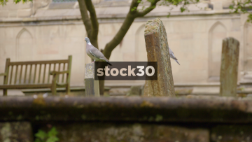Pigeons Perched On Grave Stones At St Mary's Church In Warwick, UK