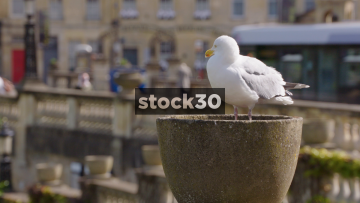 Seagull Perched By The River Avon In Bath, UK