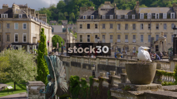 Slow Motion Shot Of Seagull Perched By The River Avon In Bath, UK