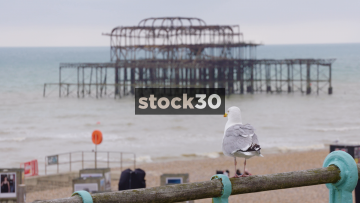 Seagull Perched On Railing In Brighton With Burnt Out Pier In Background, UK