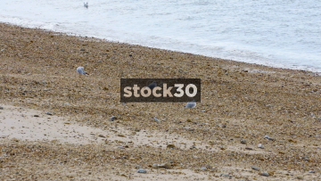 Seagulls On Southsea Beach In Portsmouth, UK