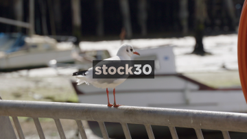 Slow Motion Shot Of A Seagull Taking Off, UK