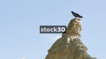 Pigeon Flying Off A Statue In Slow Motion In Madrid, Spain